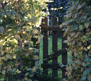 garden-gate-966108_1920